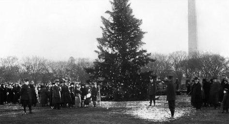 tree-1923